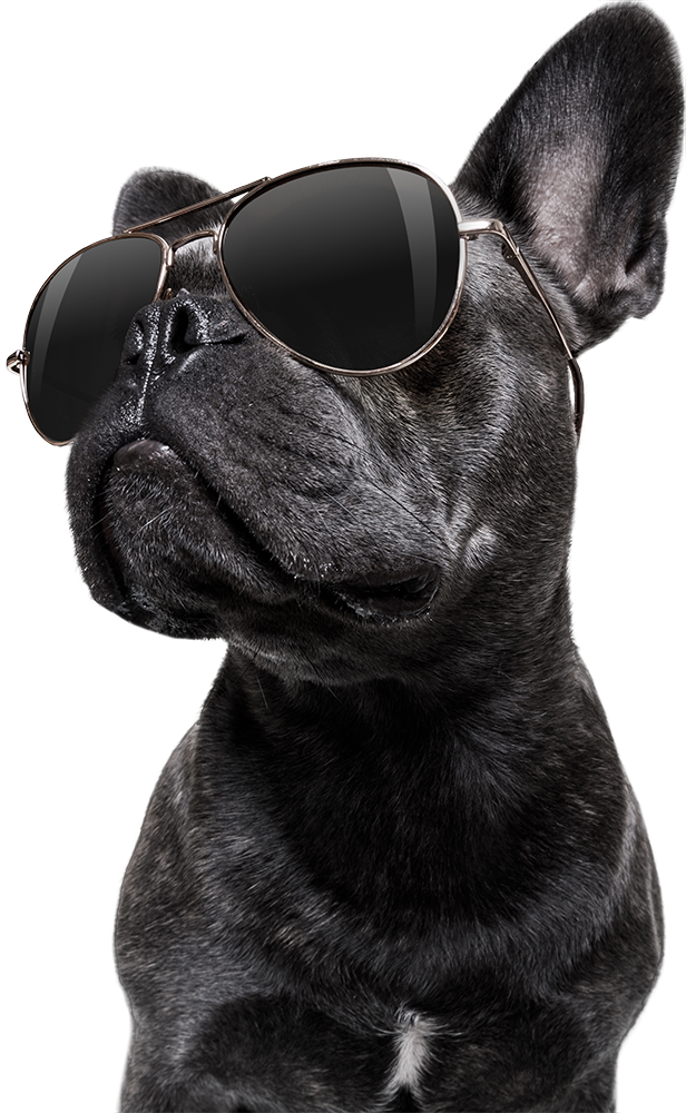 dog wearing sun glasses